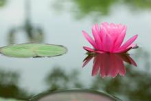 Tantra lotus flower